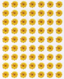 Sunflower Flower Sticker