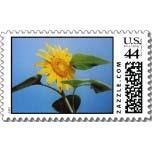 sunflower seed postage stamp